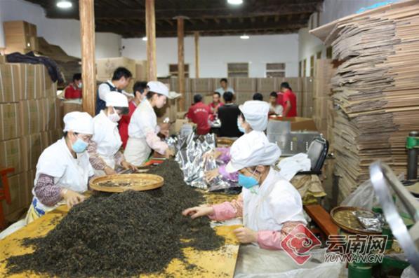 临沧凤庆县红塘村:一根承载千年茶文化的琴弦